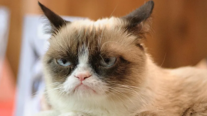 Grumpy Cat Has Died